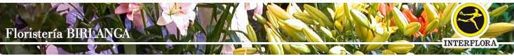 floristeria birlanga