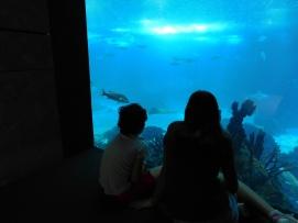 oceanario-acuario