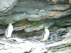 oceanario-pinguinos